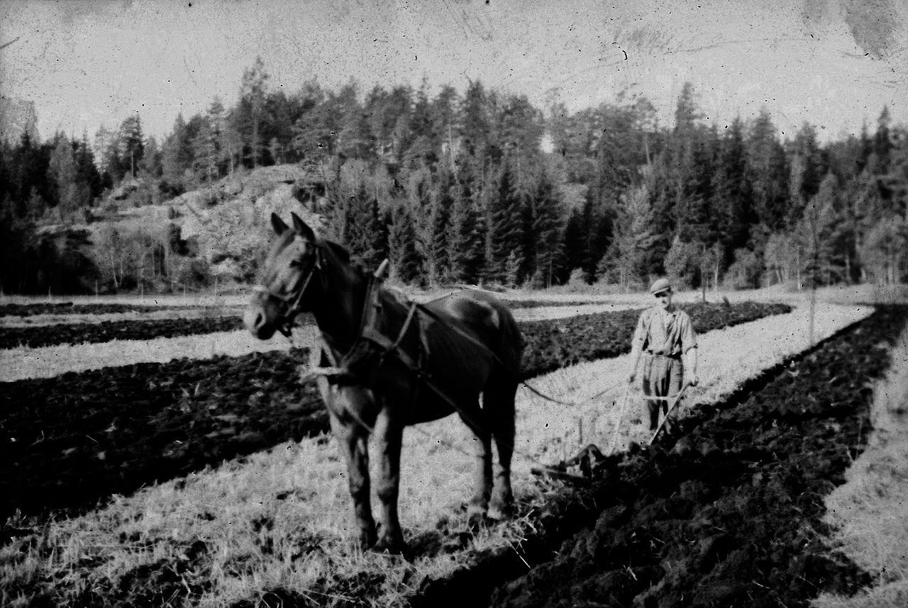 Häst-och-plog