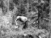 skogen-01
