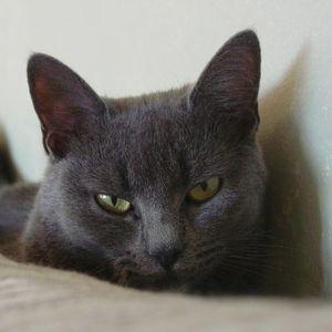300_katt